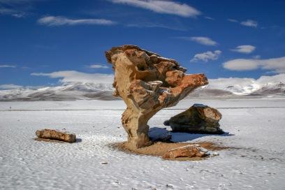 Arvore de Pedra